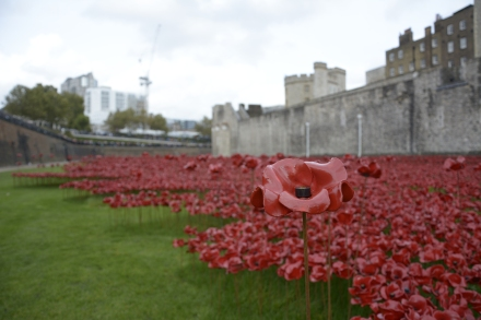The field of blood poppies in the moat at the Tower of London