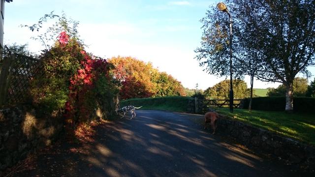 Dartmoor this morning
