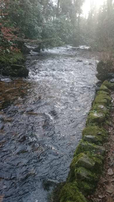 River Taw at Sticklepath - high and fast!